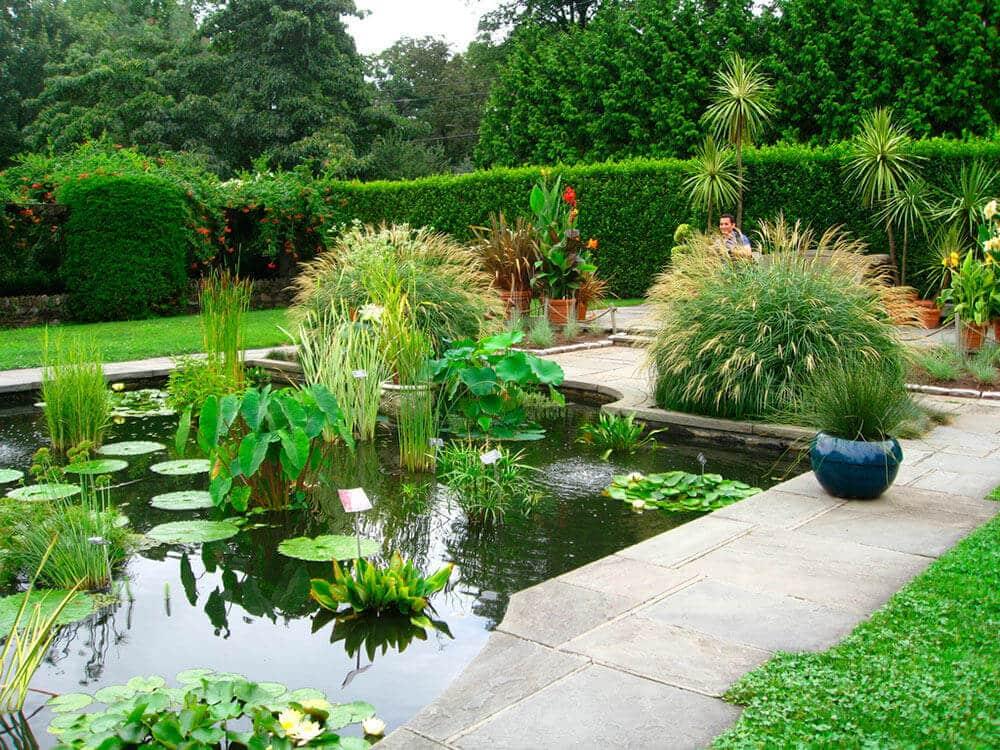 Los jardines acuáticos dan vida a tu hogar.